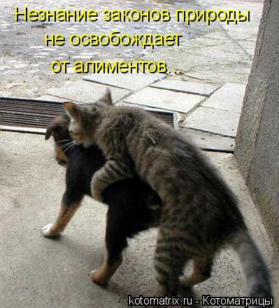 Котоматрица: Незнание законов природы не освобождает  от алиментов...