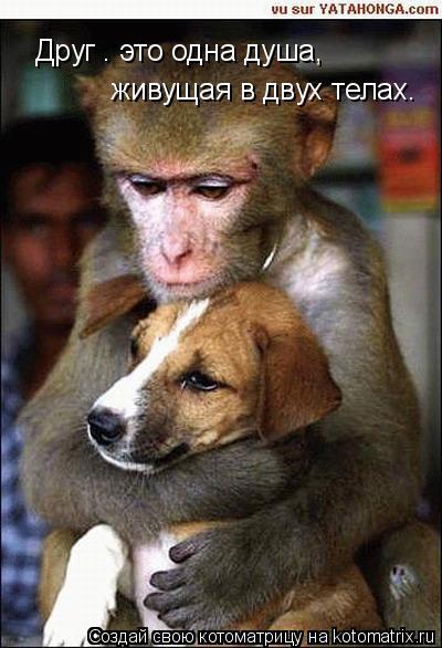 Котоматрица: Друг – это одна душа,   живущая в двух телах.
