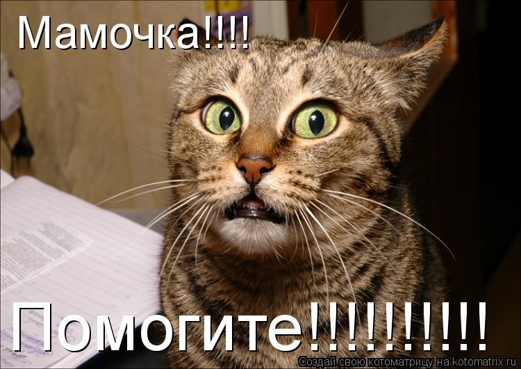 Котоматрица: Мамочка!!!! Помогите!!!!!!!!!!