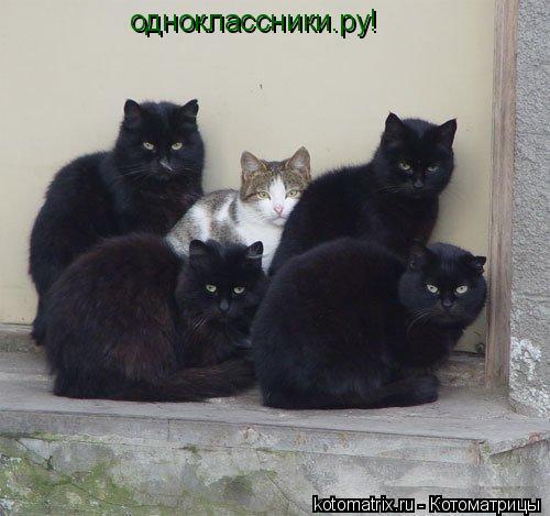 Котоматрица: одноклассники.ру!