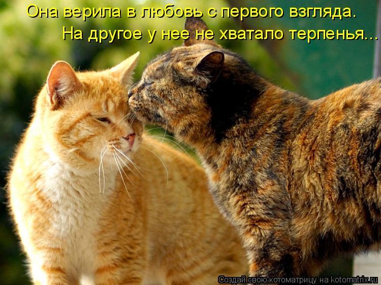 Котоматрица: Она верила в любовь с первого взгляда. На другое у нее не хватало терпенья...