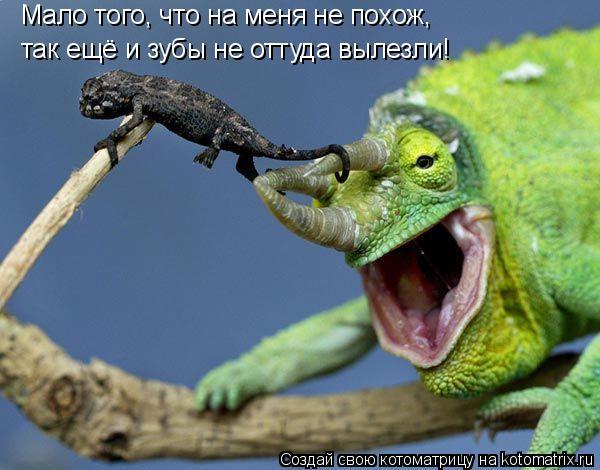 Котоматрица: Мало того, что на меня не похож, так ещё и зубы не оттуда вылезли!