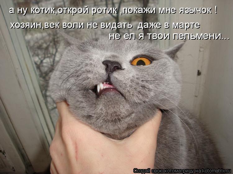 Котоматрица: а ну котик,открой ротик ,покажи мне язычок ! хозяин,век воли не видать  даже в марте не ел я твои пельмени...