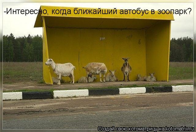 Котоматрица: -Интересно, когда ближайший автобус в зоопарк?