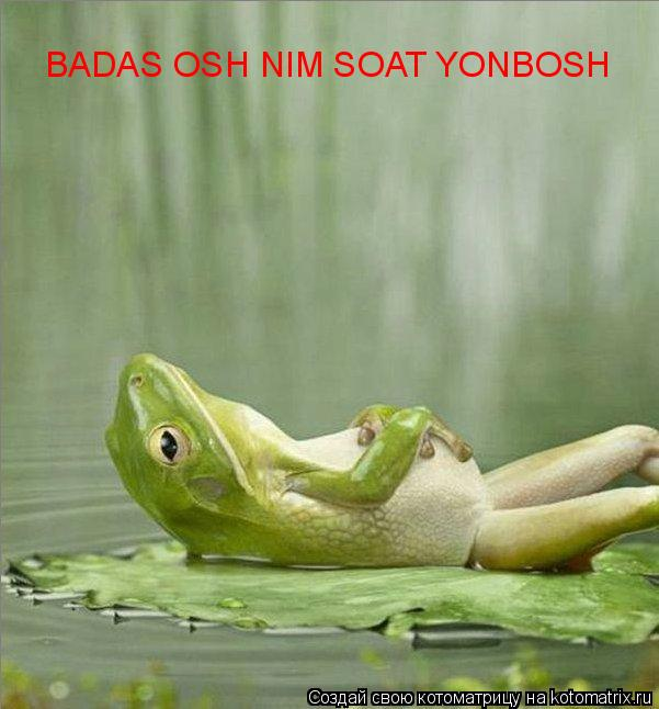 Котоматрица: BADAS OSH NIM SOAT YONBOSH