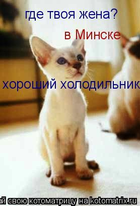 Котоматрица: где твоя жена? в Минске хороший холодильник!