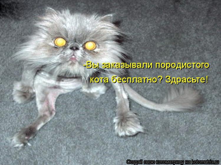 Котоматрица: -Вы заказывали породистого  кота бесплатно? Здрасьте!