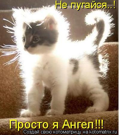 Котоматрица: Просто я Ангел!!! Не пугайся..!