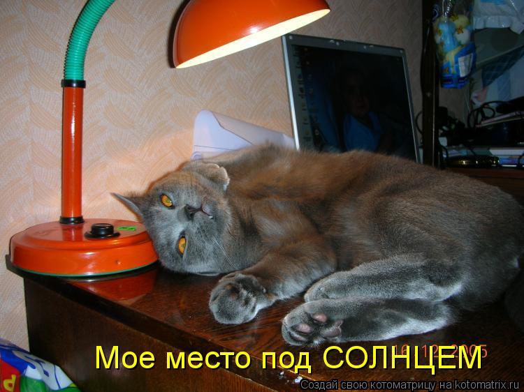 Котоматрица: Мое место под СОЛНЦЕМ