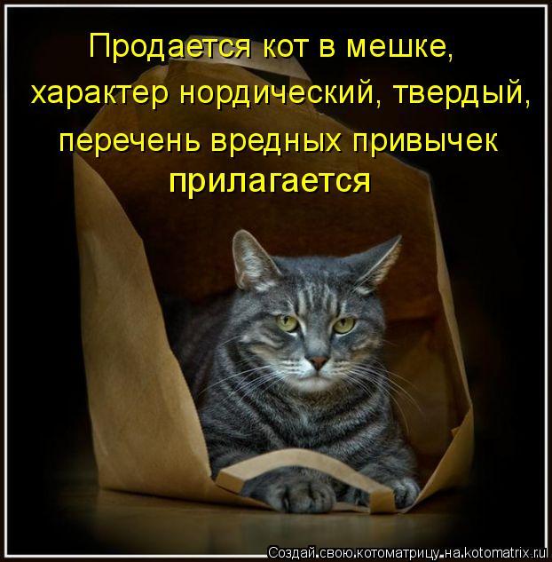 Котоматрица: Продается кот в мешке, характер нордический, твердый, перечень вредных привычек  прилагается