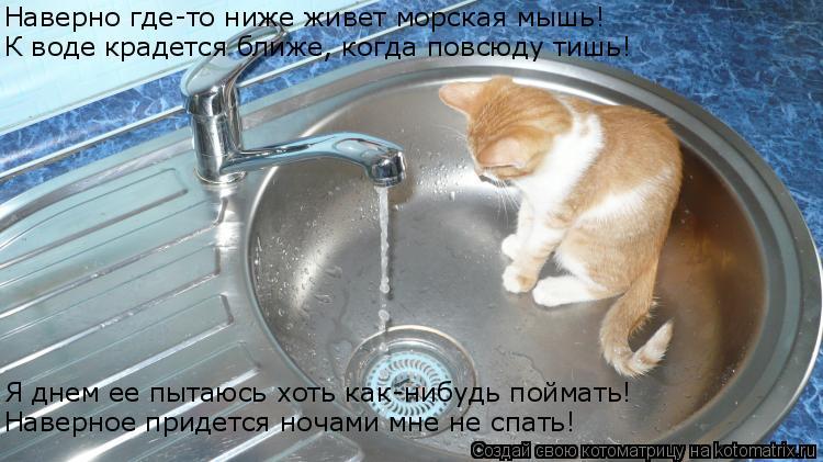 Котоматрица: Наверно где-то ниже живет морская мышь! Наверное придется ночами мне не спать! Я днем ее пытаюсь хоть как-нибудь поймать! К воде крадется бли