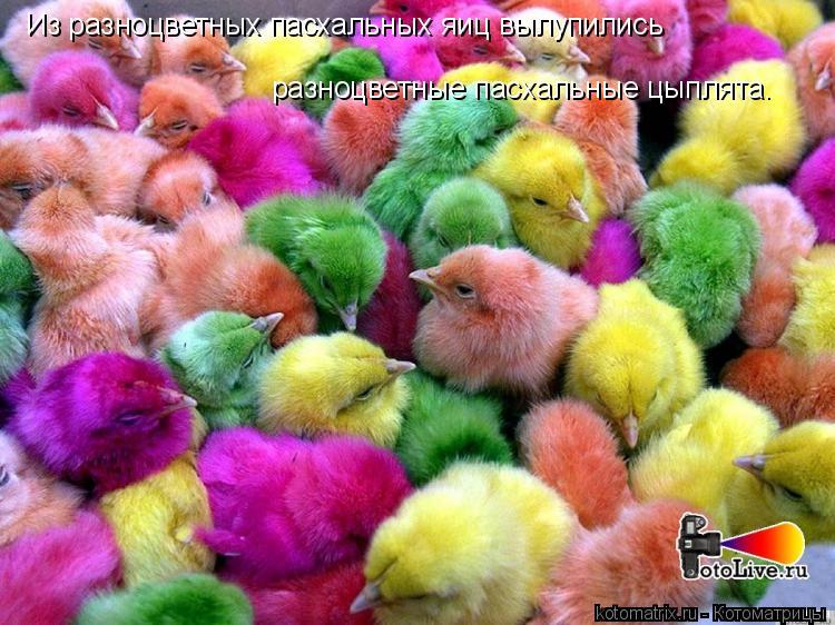 Котоматрица: Из разноцветных пасхальных яиц вылупились разноцветные пасхальные цыплята.