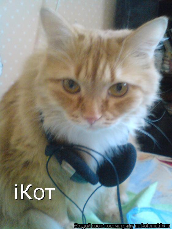 Котоматрица: iКот