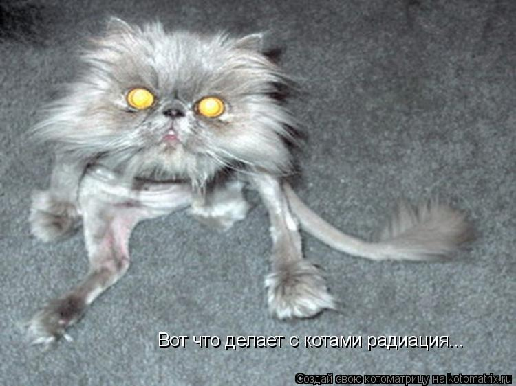 Котоматрица: Вот что делает с котами радиация...