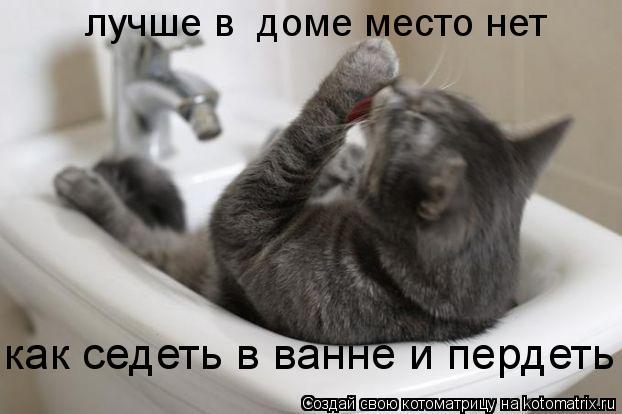 Котоматрица: лучше в  доме место нет как седеть в ванне и пердеть