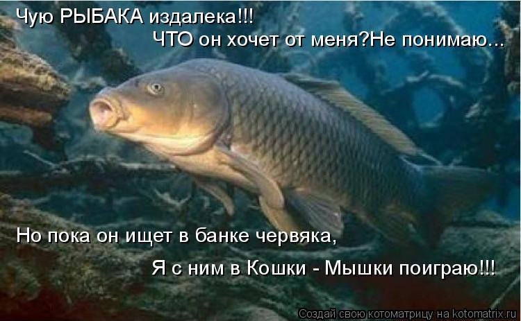 пословица рыбак рыбака видит из далека