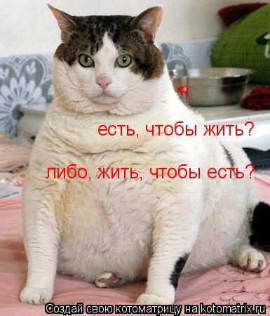 Котоматрица: есть, чтобы жить? либо, жить, чтобы есть?