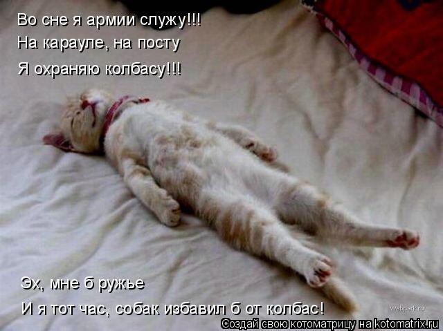 Котоматрица: Во сне я армии служу!!! На карауле, на посту Эх, мне б ружье И я тот час, собак избавил б от колбас! Я охраняю колбасу!!!