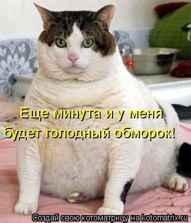 Котоматрица: Еще минута и у меня  будет голодный обморок!
