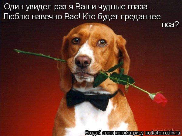 Котоматрица: Один увидел раз я Ваши чудные глаза... Люблю навечно Вас! Кто будет преданнее пса?