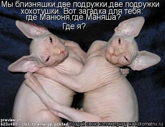 Котоматрица: Мы близняшки,две подружки,две подружки хохотушки. Вот загадка для тебя: где Манюня,где Маняша? Где я?