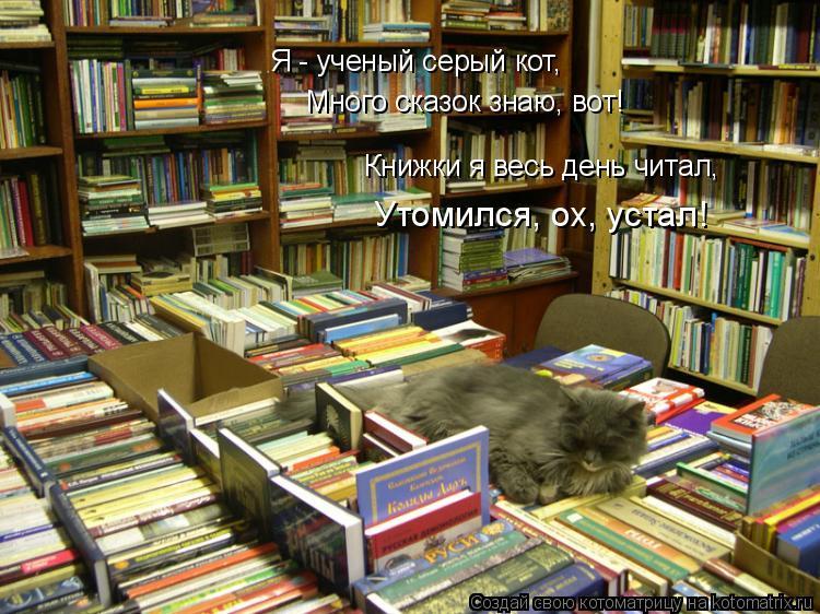 Котоматрица: Я - ученый серый кот, Много сказок знаю, вот! Книжки я весь день читал, Утомился, ох, устал!