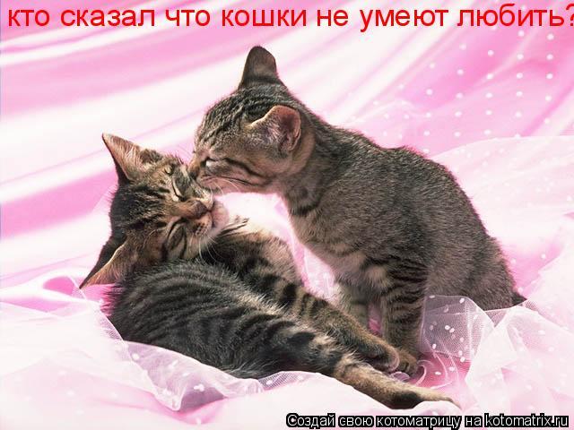Котоматрица: кто сказал что кошки не умеют любить?