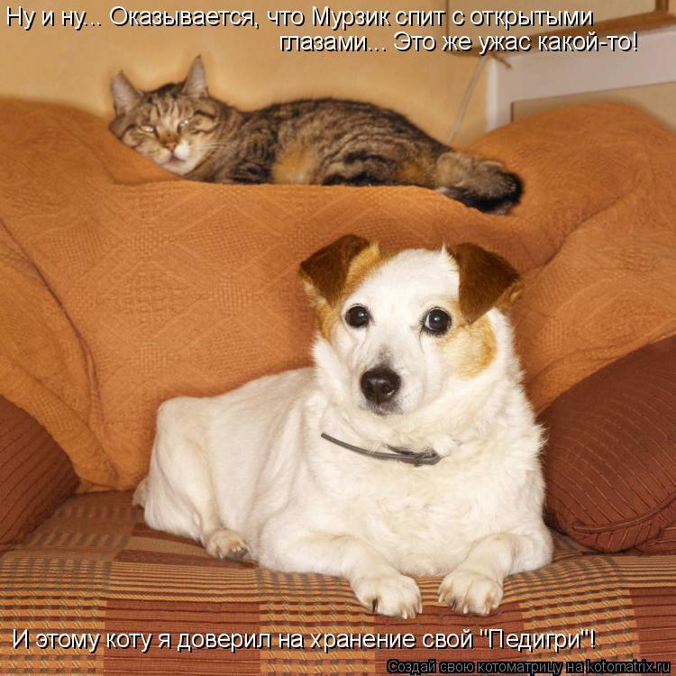 """Котоматрица: Ну и ну... Оказывается, что Мурзик спит с открытыми  глазами... Это же ужас какой-то! И этому коту я доверил на хранение свой """"Педигри""""!"""