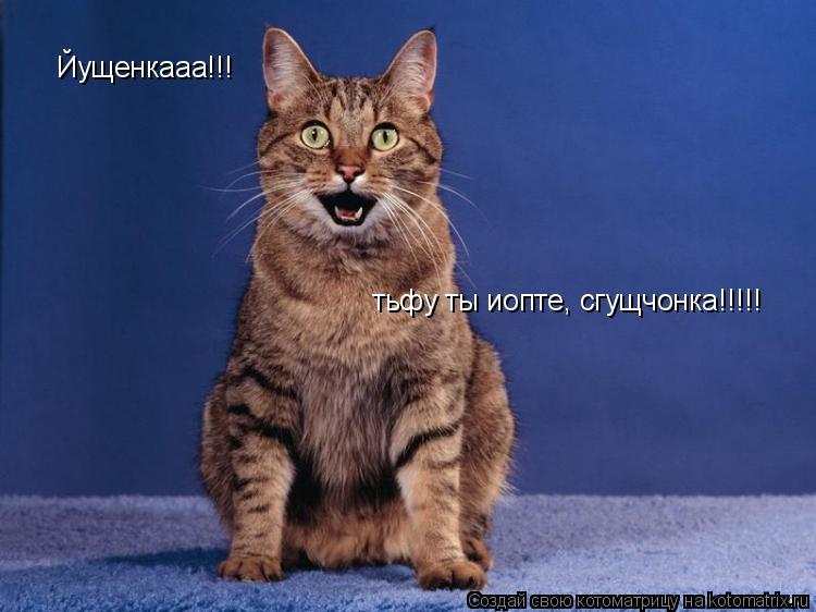 Котоматрица: Йущенкааа!!! тьфу ты иопте, сгущчонка!!!!!