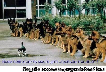 Котоматрица: Всем подготовить место для стрельбы лопатой!!!