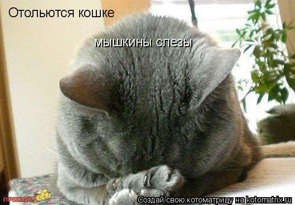 http://kotomatrix.ru/images/lolz/2009/06/03/2.jpg