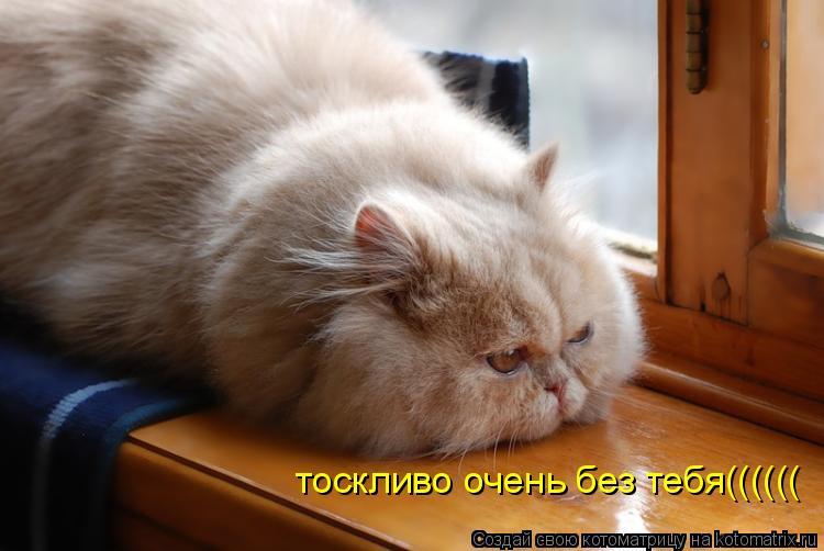 Котоматрица: тоскливо очень без тебя((((((