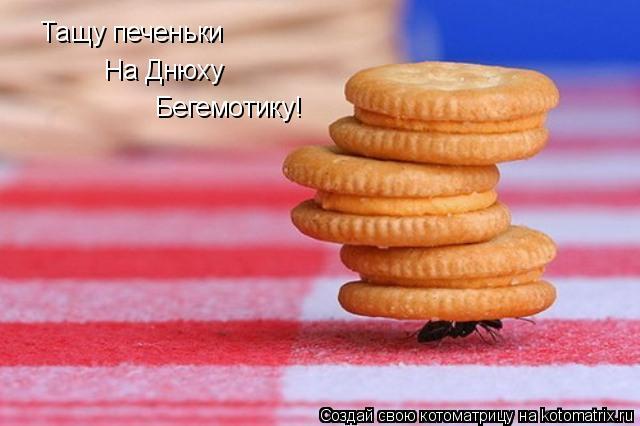 Котоматрица: Тащу печеньки На Днюху Бегемотику!