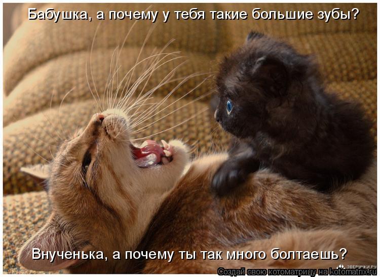 Котоматрица: Бабушка, а почему у тебя такие большие зубы? Внученька, а почему ты так много болтаешь?