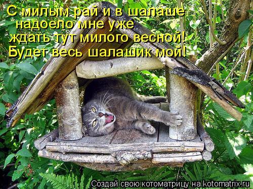 Котоматрица: С милым рай и в шалаше надоело мне уже ждать тут милого весной! Будет весь шалашик мой!