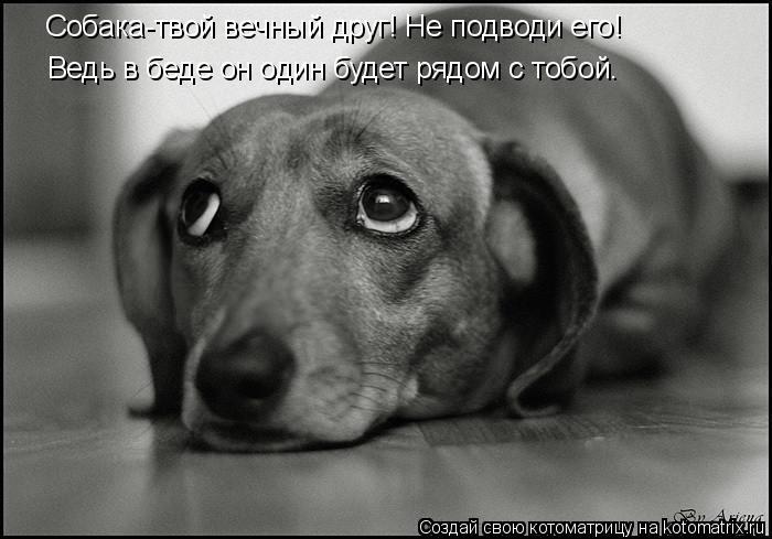 Котоматрица: Собака-твой вечный друг! Не подводи его! Ведь в беде он один будет рядом с тобой.
