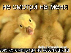Котоматрица: не смотри на меня