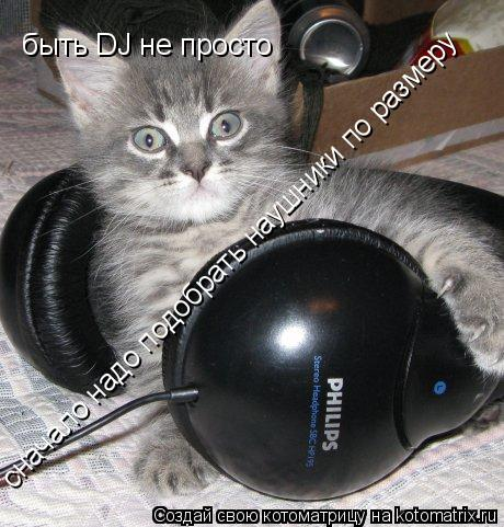 Котоматрица: быть DJ не просто  сначало надо подобрать наушники по размеру
