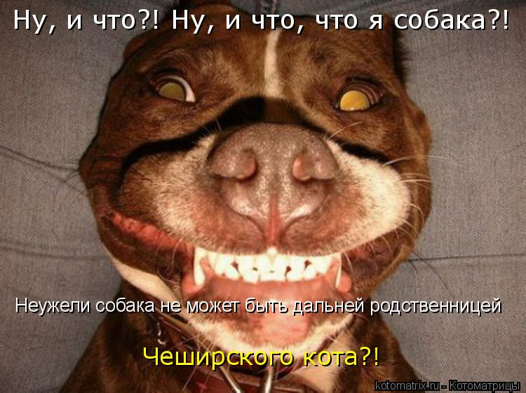 Котоматрица: Ну, и что?! Ну, и что, что я собака?! Неужели собака не может быть дальней родственницей  Чеширского кота?!