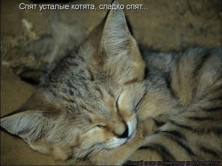 Котоматрица: Спят усталые котята, сладко спят...