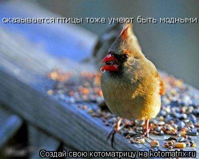 Котоматрица: оказывается птицы тоже умеют быть модными и !!!