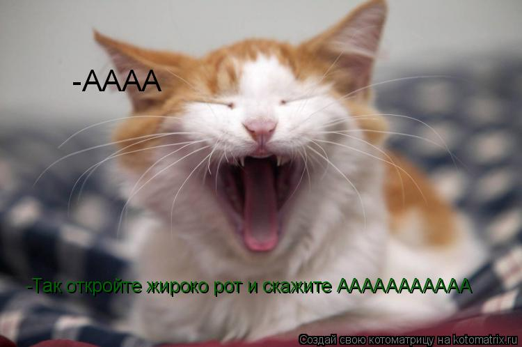 Котоматрица: -Так откройте жироко рот и скажите ААААААААААА -АААА