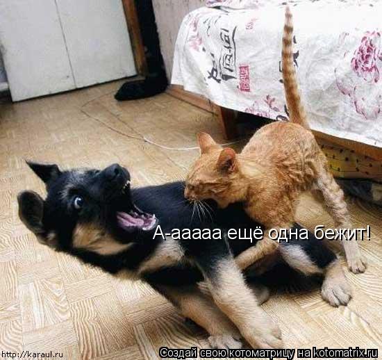 Котоматрица: А-ааааа ещё одна бежит!