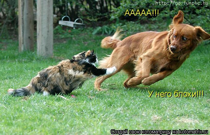 Котоматрица: ААААА!!! У него блохи!!!