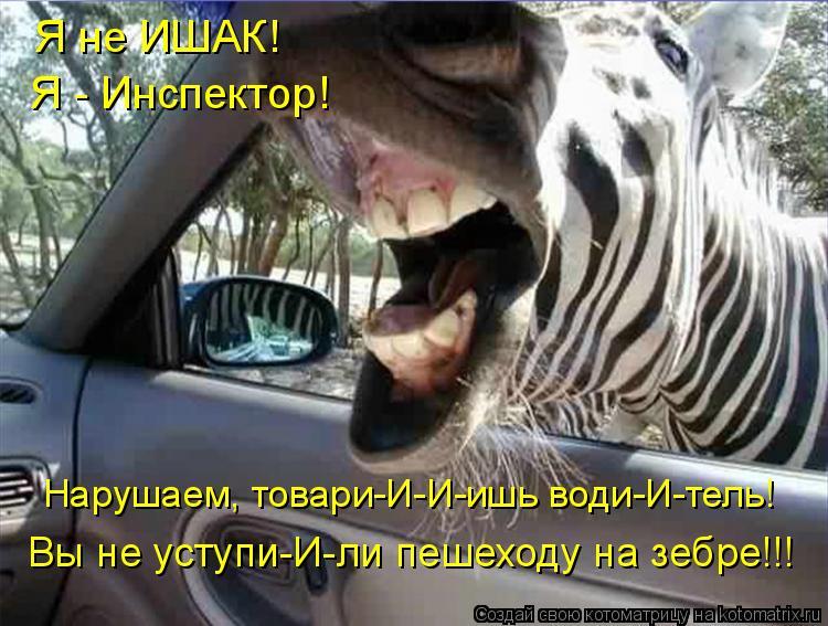 Котоматрица: Нарушаем, товари-И-И-ишь води-И-тель! Вы не уступи-И-ли пешеходу на зебре!!! Я не ИШАК! Я - Инспектор!