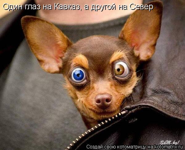 Котоматрица: Один глаз на Кавказ, а другой на Север