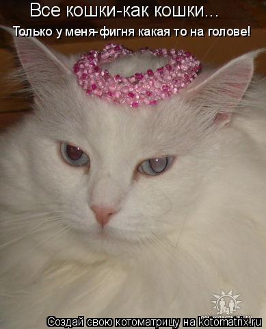 Котоматрица: Все кошки-как кошки... Только у меня-фигня какая то на голове!