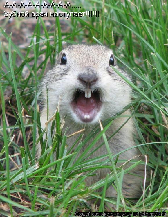 Котоматрица: А-А-А-А-А-А-А-А-А..... Зубной врач наступает!!!!!!