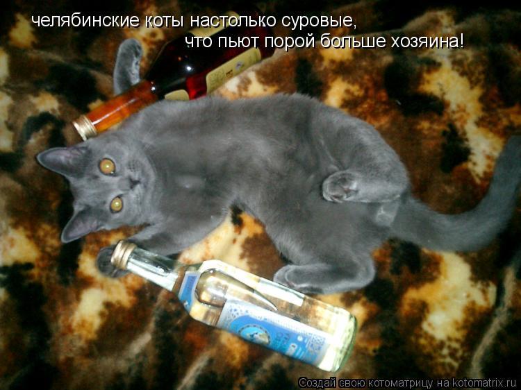 Котоматрица: челябинские коты настолько суровые, что пьют порой больше хозяина!