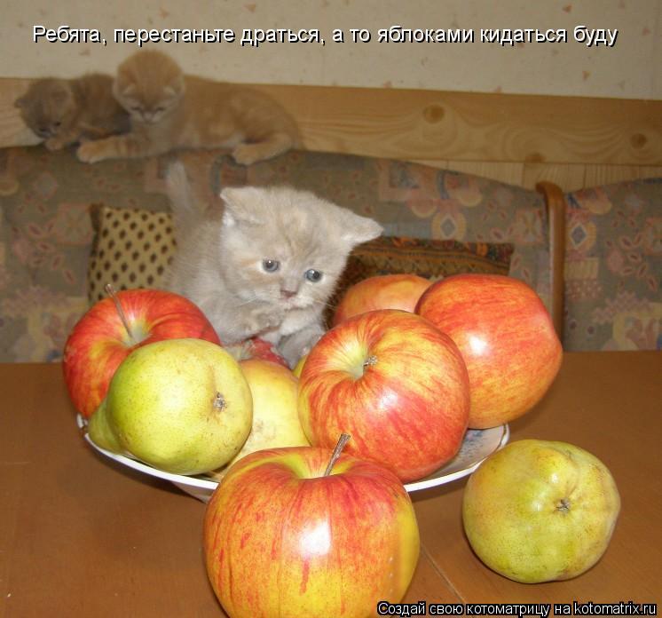 Котоматрица: Ребята, перестаньте драться, а то яблоками кидаться буду
